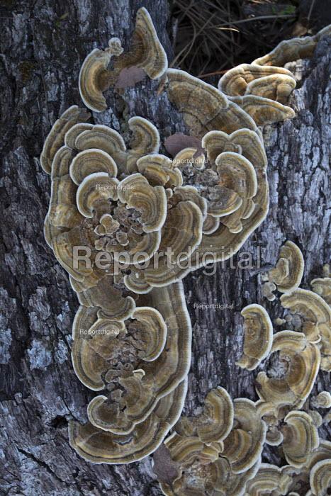 USA Fungus, Pinnacles National Park, California. - David Bacon - 2015-02-15