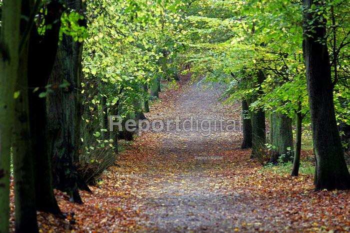 Autumn Scene, Hampstead Heath, London. - Duncan Phillips - 2004-11-12