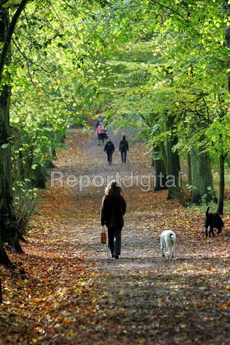 Autumn Scene, Hampstead Heath, London. People exercising and walking dogs. - Duncan Phillips - 2004-11-12