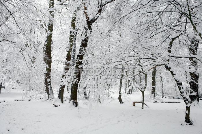Heavy Snowfall, London. - Duncan Phillips - 2009-02-02