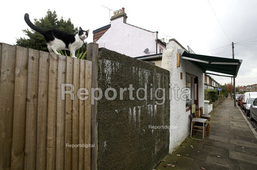 Cat balancing on a fence next to a shoe repair shop, north London - Duncan Phillips - 2008-10-15
