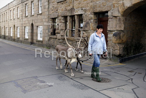 Stella Wyburne-Ridsdale walking two reindeer (male named Jingles and a female named Belle) imported from from Sweden which she gave as a Christmas present to her husband, Hugh Town, Island of St. Marys, Isles of Scilly, Cornwall. The couple are devout animal lovers - Duncan Phillips - 2010-08-29