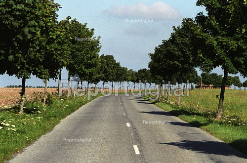Avenue of Trees along a road, Normandy, France - Duncan Phillips - 2005-07-15