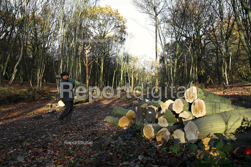 Coppicing woodland, Coalfall woods, London - Duncan Phillips - 2006-11-29