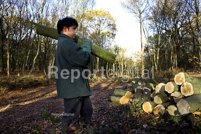 Coppicing woodland, Coalfall woods, London - Duncan Phillips - 2006-11-29