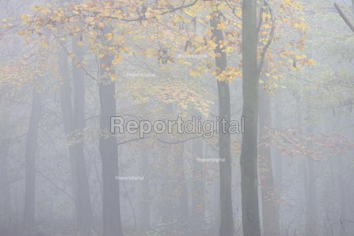 Winter mist in woodland, on the Ridgeway long distance path - Duncan Phillips - 2005-11-29