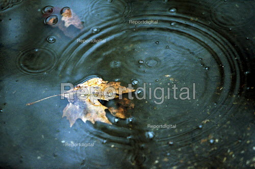 Autumn leaf in puddle with raindrops falling. - Duncan Phillips - 2002-11-18