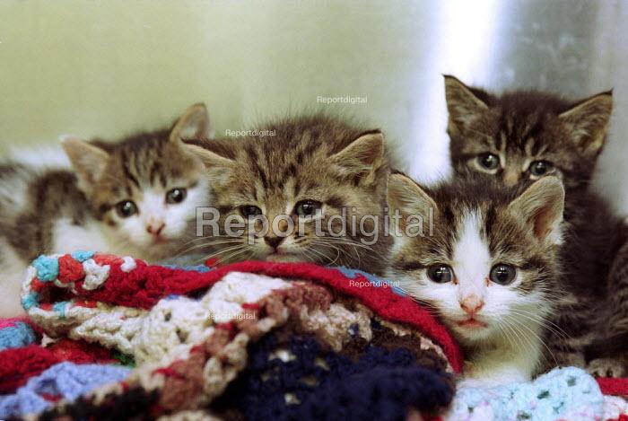 Abandoned Kittens. RSPCA Harmsworth Memorial (animal) Hospital. London - Duncan Phillips - 2000-07-18