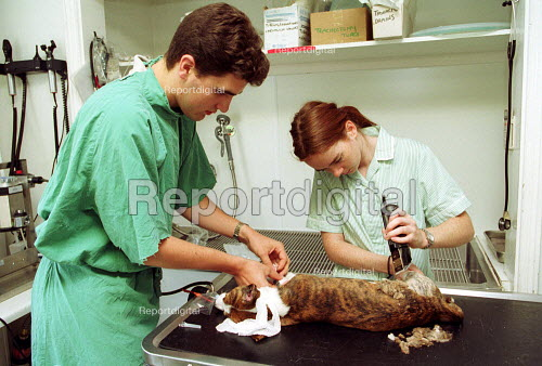 Vet and a nurse operating on a domestic dog. RSPCA Harmsworth Memorial animal Hospital. London - Duncan Phillips - 2000-07-18