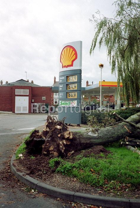 Tree blown down in gales. - John Harris - 2000-10-30
