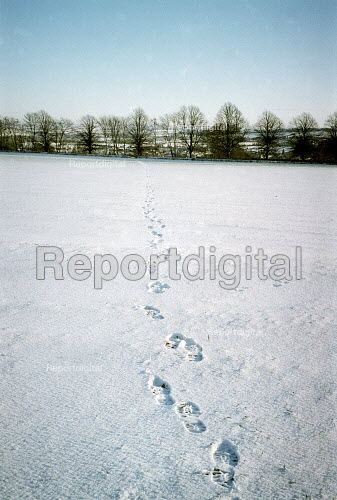 Footprints in the snow on a footpath across arable farmland. Dover's Hill in the Cotswolds. - John Harris - 2000-12-26