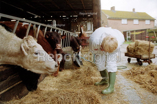 MAFF Animal Health Officer checking a herd of cattle for symptoms of foot and mouth disease on a farm at risk. - John Harris - 2001-03-28