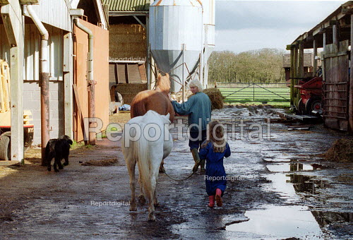 Farmer's wife and daughter crossing the farmyard leading a horse and a pony on a farm at risk of foot and mouth disease. - John Harris - 2001-03-28