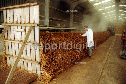 Scientist at Horticulture Research International checking steaming maure for compost. HRI Wellesbourne, Warwickshire - John Harris - 2003-04-13