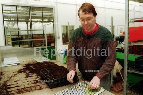 Staff picking out seedlings for planting in greenhouses at Horticulture Research International. HRI Wellesbourne, Warwickshire - John Harris - 2003-04-13