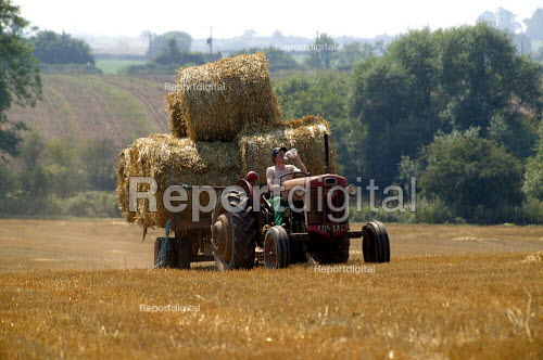 Farmworker driving a tractor and trailer, bringing in the harvest. Warwickshire. He is drinking a bottle of water. - John Harris - 2003-08-06