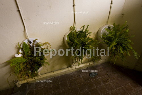 Guerrilla gardening. Hackney urinals with ferns. An East London men's toilet. - Jess Hurd - 2009-08-16