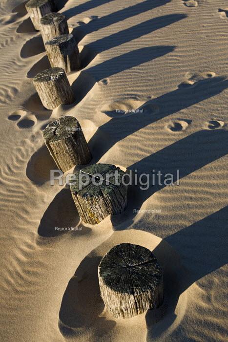 Groynes on the Calais beach at the nearest point to Dover. France. - Jess Hurd - 2009-10-15