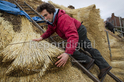 Apprentice thatcher and his master thatcher thatching a cottage roof in Warwickshire. - Jess Hurd - 2012-01-24