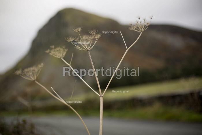 Bird Rock, Craig yr Aderyn. Tywyn, Dysynni Valley. Snowdonia National Park. Wales. - Jess Hurd - 2014-10-25