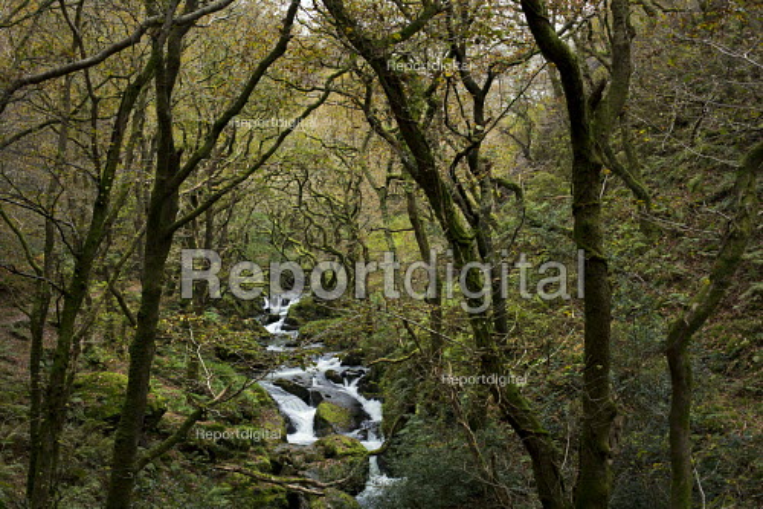 Tywyn, Dysynni Valley. Snowdonia National Park. Wales. - Jess Hurd - 2014-10-28