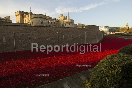 Ceramic poppies fill the Tower of London moat. Blood Swept Lands and Seas of Red, an art installation created by artist Paul Cummins, marks one hundred years since the First World War and each poppy represents a British military fatality during the war. London. - Jess Hurd - 2014-11-04