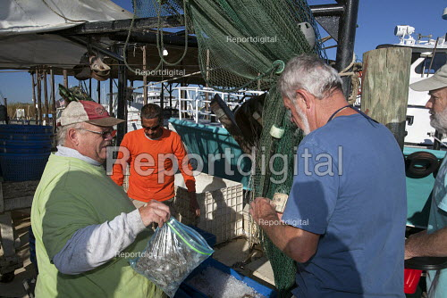 Mobile, Alabama - Shrimp trawler Capt. Sid Schwartz sells some of the days catch after the after the boat returns to the dock. The trawler is part of the Alabama Fisheries Cooperative. - Jim West - 2012-11-08
