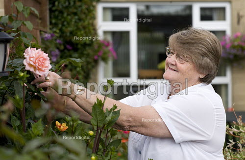 Resident enjoying the garden, snipping off a rose flower.. Selwood manage quality affordable housing and provide support services for people in housing need. - Paul Box - 2009-08-03