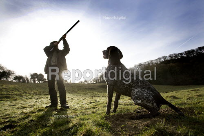 A shooting enthusiast with his gun dog and double barreled shotgun, Exmoor. - Paul Box - 2009-03-16