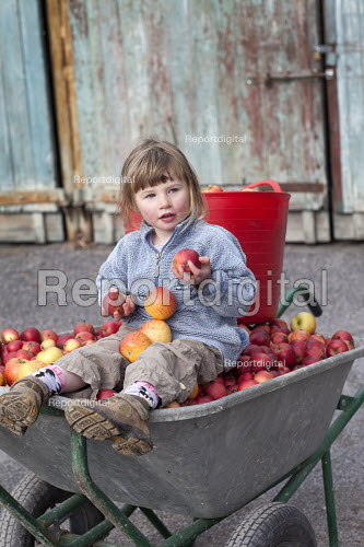 A girl sitting in a wheelbarrow of apples from her garden, near Wrexham, North Wales. - Paul Box - 2011-10-24