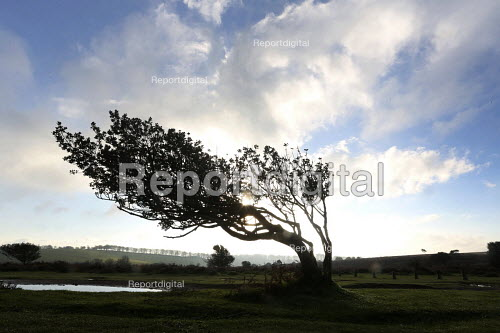 A tree bent by the wind. The Quantock Hills, Somerset. - Paul Box - 2014-11-18