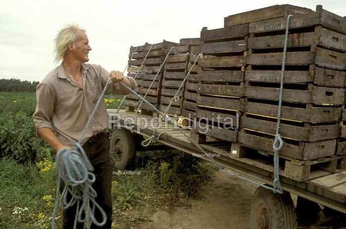 Blackcurrant farming for ribena, Essex. - Joanne O'Brien - 20021024