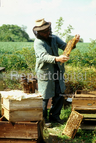 Mixed farmer tending to his bees - Joanne O'Brien - 20021024