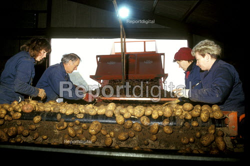 Potato riddling, cleaning and sorting potatoes, Essex - Joanne O'Brien - 2003-05-28