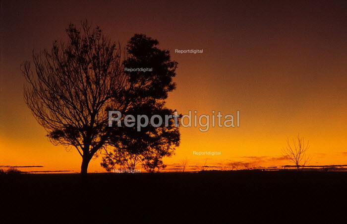 Winter Sunset on an Estancia in Uruguay. - Paul Mattsson - 1983-12-26