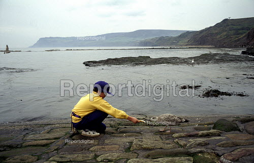 Child Feeds a piece of Bread to a Seagull, Robin Hoods Bay, North Yorkshire Coast. 1992, ... - Paul Mattsson - 1992-12-28