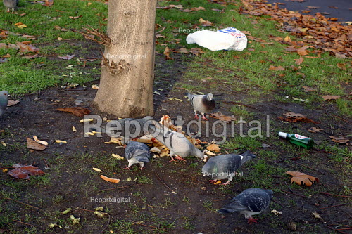 Pigeons scavenging on chips left on ground, London - Joanne O'Brien - 20021024