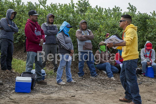 California USA UFW Union organisers recruiting farmworkers at lunchtime during a union organizing campaign after Klein Management Company cut workers wages. Most workers are indigenous Mixtec and Zapotec migrants from Oaxaca, Mexico - David Bacon - 2016-05-21