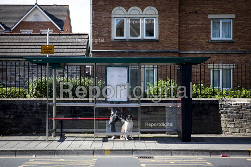 Man and his dog waiting for a bus. Cardiff, South Wales. - Connor Matheson - 2016-07-31