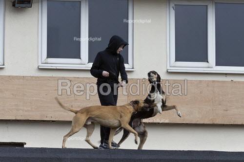 Dogs on the roof guarding a pub being refurbished, Bentilee, Stoke on Trent, Staffordshire - John Harris - 2017-02-18