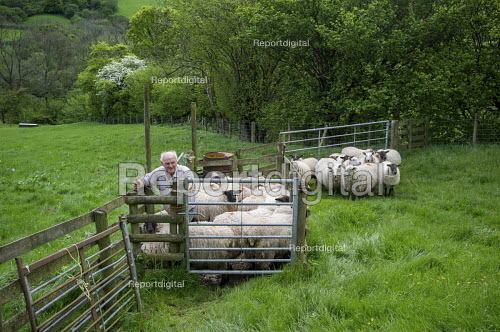 Farmer preparing sheep for shearing, The Vale of Ewyas, Wales - Philip Wolmuth - 2017-05-21