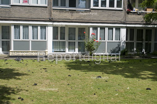 Grenfell Tower Fire. Clumps of ash that have fallen from the fire at Grenfell Tower litter the communal gardens of neighbouring coucil estates - Stefano Cagnoni - 2017-06-14