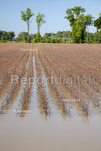 Yazoo County, USA, Mississippi Delta flooding. High volume of spring rainfall has caused widespread flooding of farmland preventing the planting of crops - Jim West - 2019-05-16