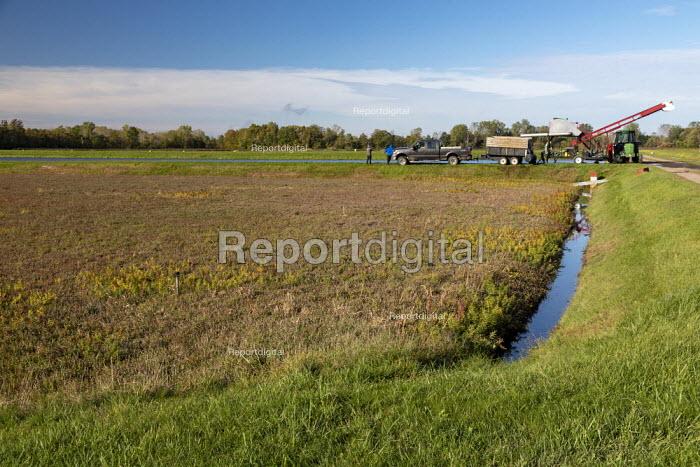 Michigan, USA: Cranberry bog, DeGRandchamp Farms - Jim West - 2019-10-10