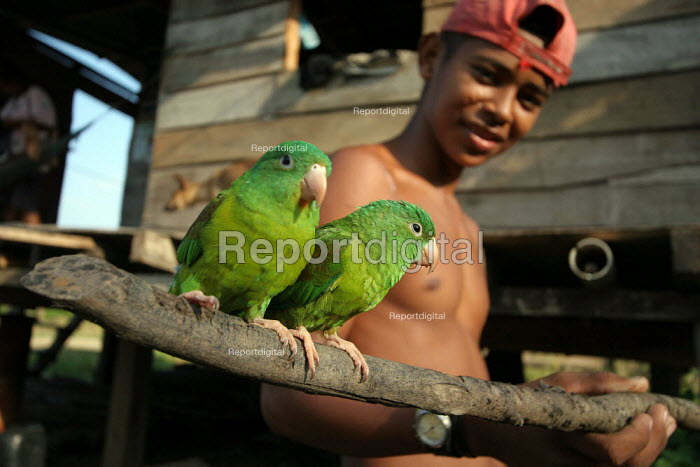 A Colombian refugee and the birds he recently caught in the jungle, El Real, Darien region, Panama, January 2006. This region is very remote. - Boris Heger - 2006-08-30