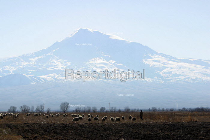 A shepherd and his animals walk at the foot of Mount Ararat, located just after the border with Turkey, near Khor Virap, Armenia, February 2005. According to the Bible account in the book of Genesis, Noahs Ark came to rest over 4300 years ago on this mountain. - Boris Heger - 2005-03-05