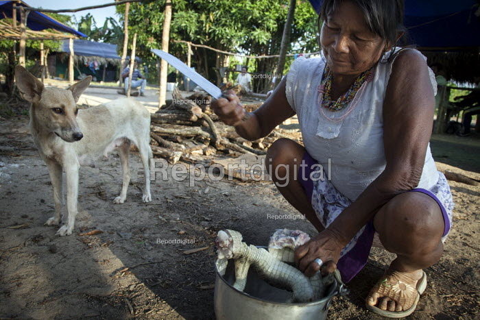 An internally displaced indigenous woman cooking a young crocodile outside her shelter. San Jose del Guaviare, Colombia. - Boris Heger - 2011-01-20