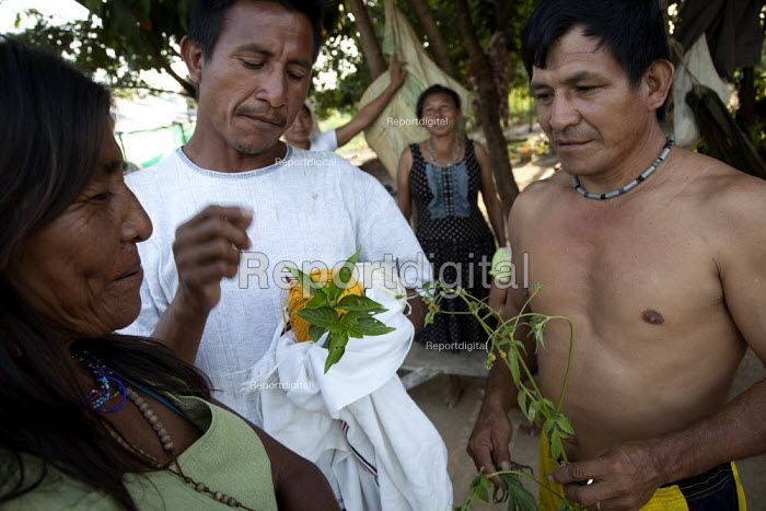 An internally displaced indigenous men who just came back from a weeks hunting, show their family members traditional medicinal herbs they have found. San Jose del Guaviare, Colombia. - Boris Heger - 2011-01-20