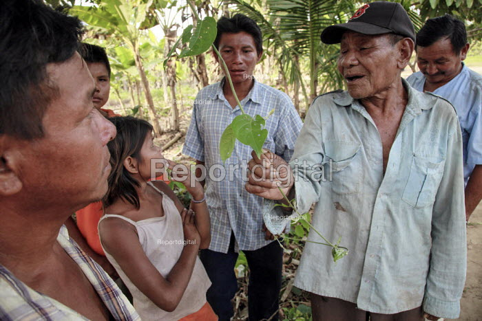 """An internally displaced indigenous shaman medicine man explaining to young members of his tribe the Ayahuasca root locally called """"Yage"""". This hallucinogen drug is commonly used by some latin american tribes during ceremonies and for spiritual purposes. Meta, Colombia. - Boris Heger - 2011-01-17"""
