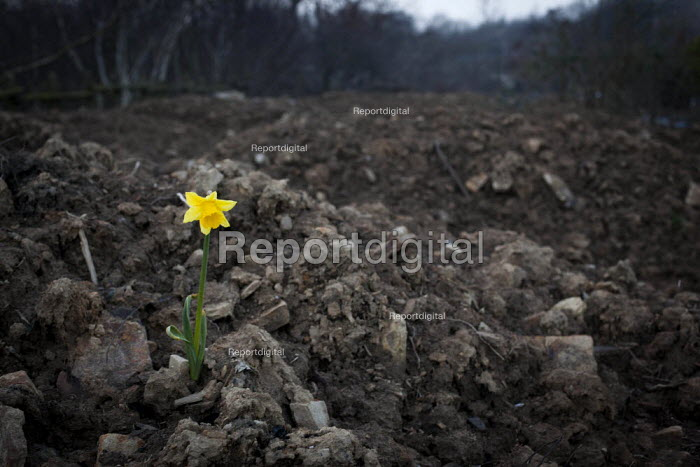 A flower amongst piles of dirt in Sheffield Ski Village. The Ski Village was burnt down in 2012 by an arson attack and has since been left derelict. Sheffield, South Yorkshire.. - Connor Matheson - 2015-03-19